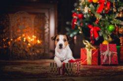 Новый год 2018: праздничный декор дома
